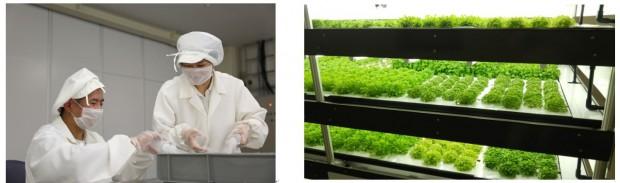 NPO法人ソーシャルハウス、植物工場を活用した農福連携セミナーと見学会を実施