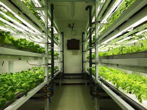 NTTファシリティーズ、青森県内初の医療法人・介護系事業所に植物工場を導入