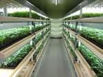 六次化ファンドによる投資、福島県にて植物工場による苗生産施設の整備へ