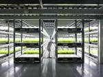 大林組、植物工場ベンチャーのスプレッドと提携。日産3万株の大規模施設を検討