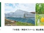 小田急電鉄と神奈川中央交通、ICT技術を活用した施設栽培による高糖度トマトを販売