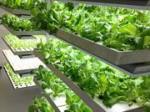 沖縄セルラー、稼働する植物工場にて来月から試験販売へ