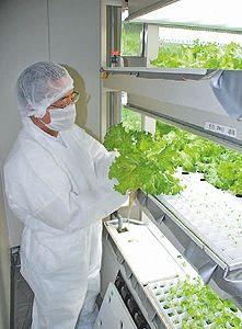 沖縄型植物工場の実証実験開始(りゅうせき建設)/廃校活用した農業体験型施設内にも水耕システム導入へ