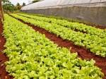 1万カ所以上もあるキューバの有機都市型農業、大きなビジネスチャンスとして狙う米国の農業資材メーカー