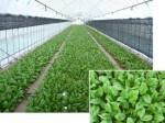 パナソニックエコ、施設園芸・低コスト型植物工場をターゲットに局所環境制御技術を導入