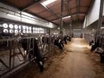 パナソニック、自動環境制御・次世代閉鎖型牛舎システムを本格導入。暑熱期の搾乳量減少抑制に効果