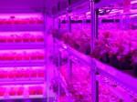 パナソニック、シンガポールにて人工光型植物工場を稼働。日本食レストラン大戸屋と提携