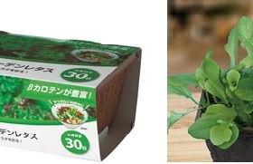 パクチーやスプラウトなど「DCMブランド 栽培セット」が新発売。再生紙によるペーパープランターを採用