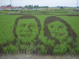 フィリピンの田んぼアート。ドローン・アグロツーリズムによる若者世代への新たなアプローチ