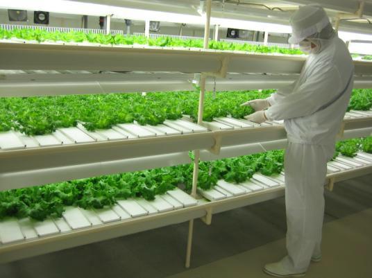 富山市に建設予定のエゴマの栽培を目的とした完全人工光型植物工場にてフィリップス社の育成用LEDを導入