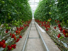 米国オハイオ州にて国内最大規模の植物工場施設を建設。長期計画にて1億ドル以上の投資額