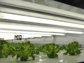 大阪府による農福連携イベント。マルシェの開催や植物工場の見学会も実施