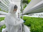 エスペック、植物工場による海洋深層水を使用した高機能野菜の実証事業を推進。海外プロモーションも実施