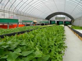 台湾「国際果実・野菜見本市」展示会、植物工場プラントメーカーからアクアポニックまで幅広く出展