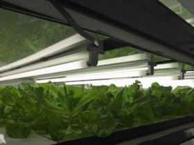 富士経済による植物工場・施設園芸などの最新市場調査。国内プラント市場は2020年に263億円へ拡大予測