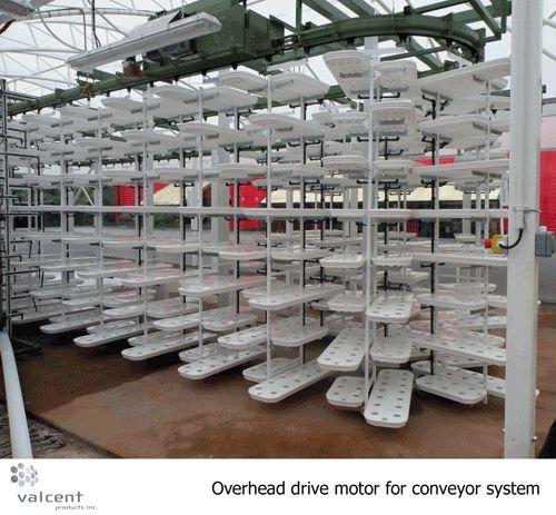 多段式・水耕栽培(太陽光利用型植物工場)システム普及にむけてグローバルに展開するValcent Products社について(栽培風景写真)