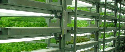 植物工場による葉野菜の生産・販売/店舗・施設内に水耕システムを導入した事例も相次ぐ(建設工事の柏木、石川県のレストラン)
