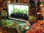 都市近接の低コスト型植物工場にてフレッシュハーブの生産へ(アグリサーチ)