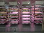 イノベタスの世界トップ規模のフルLED植物工場の完成披露へ