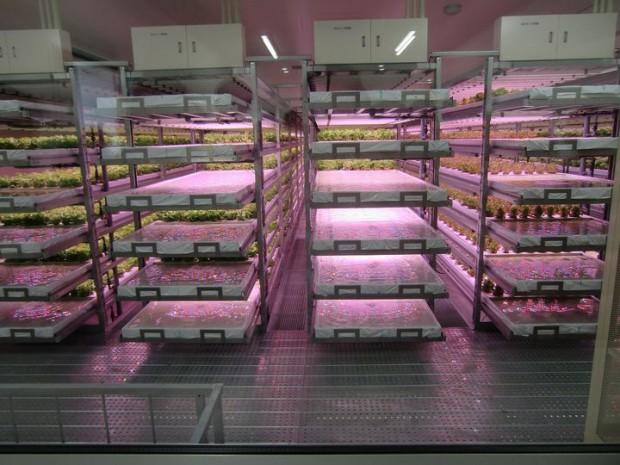 イノベタスの世界最大級のフルLED植物工場の完成披露へ