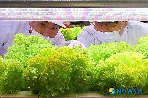 韓国の大手ディスカウント・スーパーのロッテマートが店内に植物工場を設置