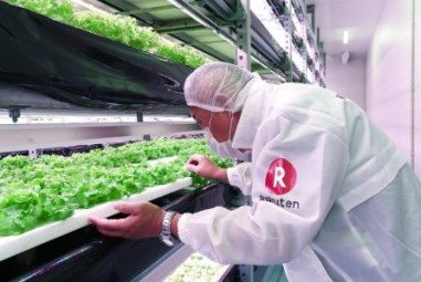 楽天の特例子会社が障害者雇用型の植物工場施設を稼働、野菜の社員食堂への提供スタート