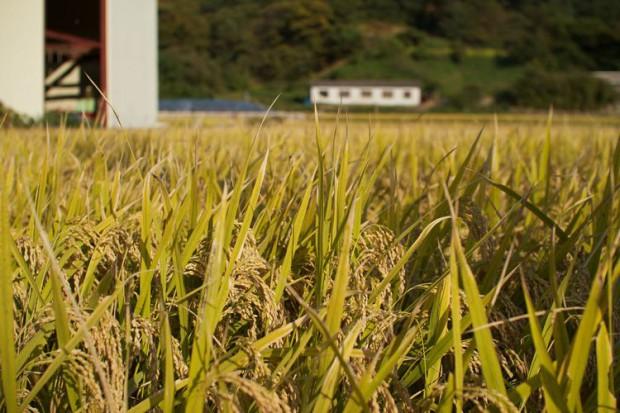 ソウル市におけるコメ生産者への支援、都市型農業ブランドの強化へ