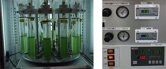 光合成によるバイオプラスチックの生産効率で世界最高レベル達成/理化学研究所