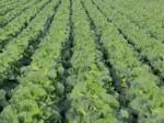 6次産業化ファンド支援、野菜の調達拡大と加工事業へ(アグリンクエブリイ広島)