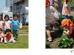 三菱重工グループの田町ビル、屋上緑化庭園に保育園児を招きイチゴ狩りを開催