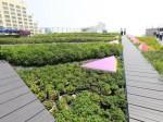 タイのショッピングモールでの屋上菜園。環境志向型アグリビルディングの実証スタート