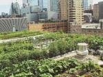 ライアソン大学による都市型・屋上ファームが1周年の収穫祭を開催