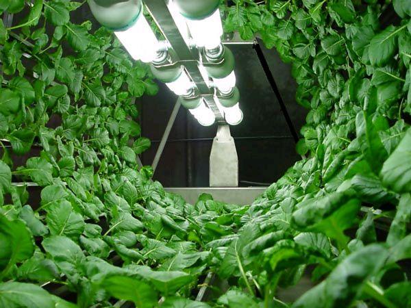 回転させて野菜を栽培する植物工場(オメガ・ガーデン社)
