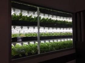 人工光型植物工場の菱熱工業、外食店舗を運営するダイム社における施設建設を竣工