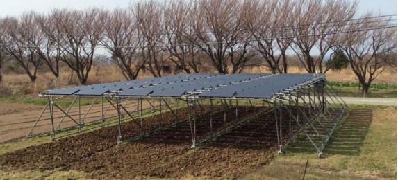 ソーラーフロンティアが佐渡島での「営農型発電」実証にCIS薄膜太陽電池パネルを提供
