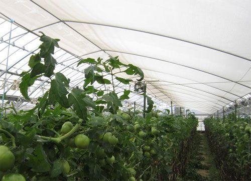 サカタのタネ、オールシーズン対応の農業用ハウス内張り資材「快晴カーテン」を発売