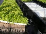 太陽光利用型植物工場を活用した震災復興事業が倒産へ