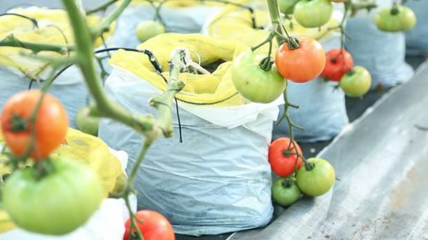 農業ベンチャーseak、新規就農者が即時活躍できる仕組み「LEAP」を提供開始。6千万の資金調達も実現