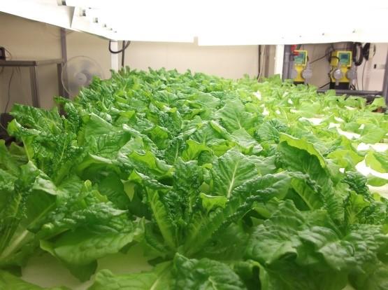 植物工場メーカーが障害者向けのB型就労支援施設をオープン
