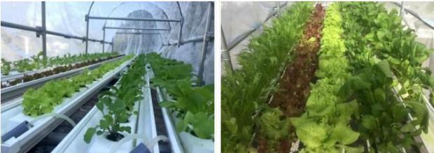 セプトアグリ、液肥を使用しない水耕栽培・屋外設置型ユニット「EZ水耕菜園」の販売受付を開始
