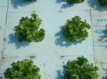 セプトアグリが液肥を使わない独自の水耕栽培技術の試験的導入農家の募集を開始