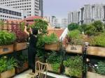 シンガポールでの都市型農業ブーム。自然公園エリアの貸農園も予約待ちへ