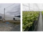 宮城県石巻・津波被害の中学跡地に太陽光利用型植物工場・ベビーリーフの生産へ