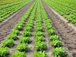 JAおうみ冨士とパナソニック、双方向型農業管理システム「栽培ナビ」の実証実験を開始
