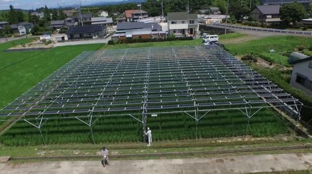 発電マン・ベリーズ、売電単価24円時代に対応した営農型発電設備 「ソラグリ」を販売開始