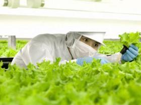 スプレッド・JXエネルギーなど、植物工場におけるグルタチオンを利用した栽培技術の共同研究を開始
