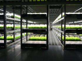 大規模植物工場のスプレッドが生産体制を増強・フランチャイズ事業を展開へ