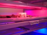 スタンシステム、LED植物工場にIBMクラウド「SoftLayer」を活用。栽培情報ビックデータ分析に基づいたレシピ開発も