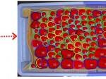静岡県農林技術研究所が画像処理装置の開発により、イチゴのパック詰めを効率化