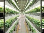 日清紡による植物工場イチゴ「あぽろべりー」の出荷開始